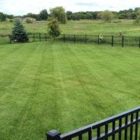 fertilizing-weed-control